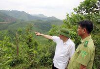 Ứng dụng phần mềm theo dõi diễn biến rừng