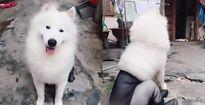 Chú chó 'đáng thương' này đã khiến tất cả 'đứng ngồi không yên'