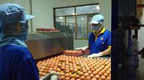 Bỏ kiểm dịch trứng gia cầm: Lo tái phát dịch cúm gia cầm