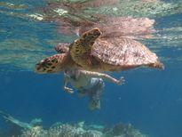 Cách khám phá Maldives khi không rủng rỉnh tiền bạc
