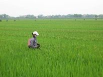 Tái cơ cấu trồng trọt: 7 mặt hàng nâng hạng trên 1 tỉ USD