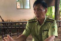 Vụ 'hàng trăm hécta rừng bị chặt, vì cho là nghèo kiệt' ở Bình Phước: Kiểm lâm ngăn, tỉnh vẫn cho chặt hạ