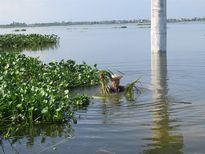 Bàng hoàng nước thượng nguồn đổ về nhấn chìm hàng ngàn ha lúa Vĩnh Phúc
