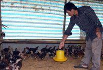 Vốn 'mồi' giúp nông dân làm ăn lớn