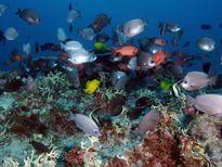 Mỹ mở rộng khu bảo tồn hải dương lớn nhất thế giới