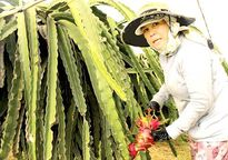 Nông dân 'tẩy chay' VietGap