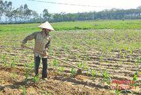Nam Đàn: Thưởng 10 triệu đồng cho xã trồng 100 ha ngô đông