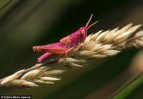 Chiêm ngưỡng những con vật có màu sắc dị thường