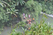Lâm Đồng: Đã phát hiện thi thể nam du khách bị nước cuốn trôi mất tích