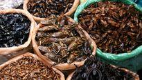 Bộ Y tế cảnh báo ngộ độc khi ăn côn trùng