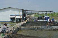 Liên tiếp xảy ra các vụ thủy sản nuôi trên các sông chết hàng loạt. Vì sao?
