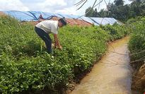Dân tố ba công ty xử lý chất thải ở Đồng Nai gây ô nhiễm