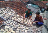 Thanh Hóa: Hàng chục tấn cá lồng chết bất thường, ước tính thiệt hại hơn 8 tỷ đồng