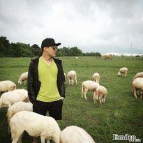 Mê đắm cánh đồng cừu đẹp như trời Âu ở Vũng Tàu