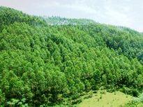 Chi sai hàng tỉ đồng quỹ bảo vệ rừng: Kiểm điểm Sở NNPTNT, thu hồi gần 300 triệu đồng