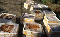 Bắt xe khách vận chuyển hơn 500 kg nhộng tằm đã bốc mùi hôi thối