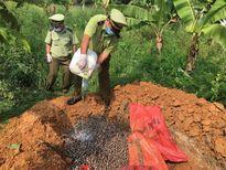 Hoa quả và thực phẩm bẩn liên tục nhập lậu qua biên giới Móng Cái