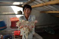 Formosa xả thải độc: Nông dân sản xuất giỏi méo mặt