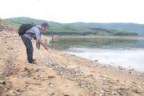 Hàng chục tấn cá chết ở Quảng Nam không phải do ô nhiễm, độc tố