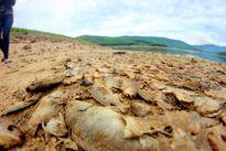 Cá chết ở đập Phước Hà: Không phải do nước ô nhiễm