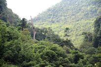 Thủy điện trong khu bảo tồn, chính quyền địa phương và kiểm lâm đều phản đối