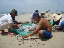 Tháng 10 người dân nhận tiền đền bù thiệt hại cá chết tại 4 tỉnh miền Trung