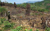 Cần chấm dứt nạn phá rừng để trồng rừng ở khu vực phòng hộ hồ chứa nước Đông Tiễn