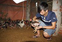 Tự tạo cơ hội: Nuôi gà Đông Tảo siêu sạch