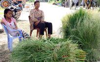 Độc đáo chợ cỏ vùng Bảy Núi