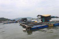 Cá chết ở Nghi Sơn: Cá thiếu ô xy vì Amonia vượt ngưỡng vài chục lần