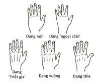 Xem hình dạng, độ dài ngắn của bàn tay biết ngay tâm tính