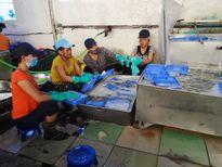 Phát hiện cơ sở sản xuất cơm hộp bẩn cho hàng trăm công nhân