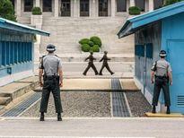 Lại có thêm vụ đào thoát hy hữu từ Triều Tiên sang Hàn Quốc