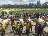 Number 1 mang không khí náo nhiệt đến lễ hội đua bò Bảy Núi