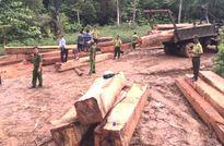 Bắt quả tang 4 người trong bãi gỗ lậu ở cửa rừng