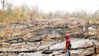 Phun thuốc diệt cỏ để lấy lại đất rừng