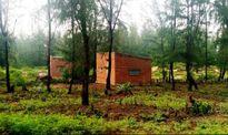 Bình Định: Báo động tình trạng chiếm đất rừng phòng hộ ven biển dựng nhà