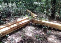 Đăk Lăk: Bắt 3 đối tượng khai thác gỗ trái phép trong khu bảo tồn