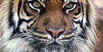 Hoàng hậu gan dạ hai lần bảo vệ vua trước hổ dữ, voi điên…