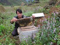 Mật ong bạc hà Hà Giang: Bảo vệ thương hiệu bằng cách nào?