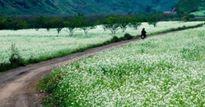 Giới trẻ đua nhau 'check-in' những cánh đồng hoa đẹp ngất ngây