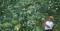 Dân văn phòng 'lác mắt' nông dân thu nhập 30 tỷ/năm nhờ trồng cây hiếm