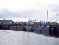 Thái Bình hoàn tất việc đưa tàu thuyền vào nơi tránh trú bão
