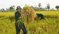 """Công an, bộ đội, học sinh gặp lúa giúp dân """"chạy"""" bão số 7"""