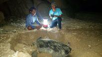 Nỗi đau đáu của những người trẻ giữ rùa trên đảo Hòn Cau