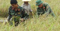 Hải Phòng: Hàng nghìn chiến sĩ giúp dân thu hoạch lúa mùa chạy bão
