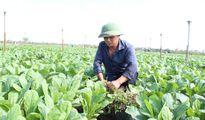 Tráng Việt hướng tới thương hiệu rau an toàn