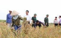 Chủ tịch Hải Phòng xuống ruộng gặt lúa
