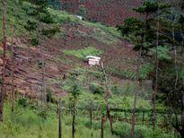 Kon Tum kỷ luật các cán bộ để xảy ra vụ phá rừng phòng hộ