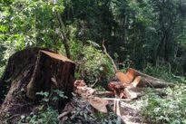 Gia Lai: Bắt giữ 7 đối tượng tấn công, sát hại kiểm lâm